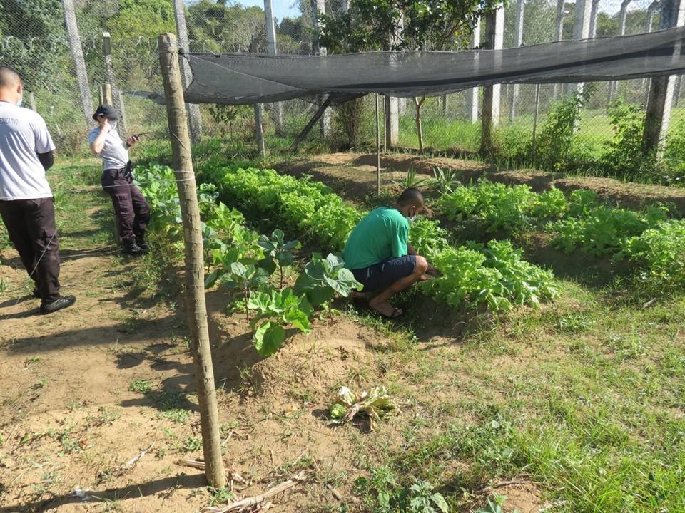 Adolescentes da Unip Norte cultivam horta para consumo próprio