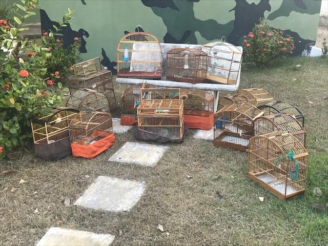 BPMA apreende 15 pássaros silvestres durante fiscalização em Colatina