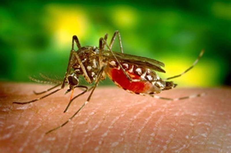 Casos de dengue diminuem no Espírito Santo