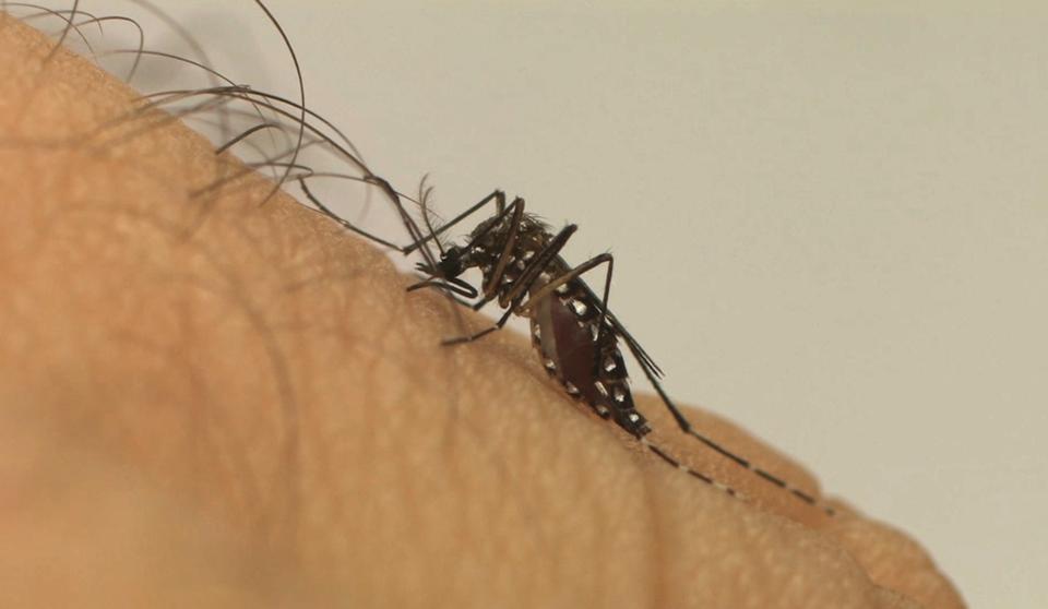 Você sabia que a Zika pode ser transmitida de três formas diferentes?