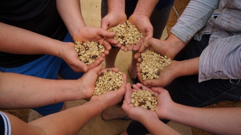 Cafeicultura capixaba contribui para possível supersafra nacional