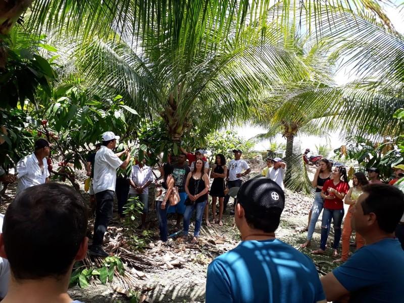 Cultivo do cacau é alternativa para diversificar a produção agrícola em Vila Pavão