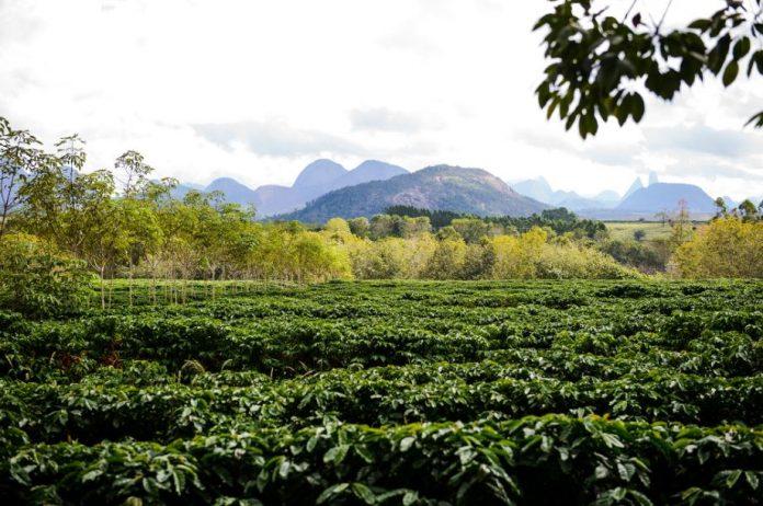 Sicoob libera R$ 153,5 milhões para investimentos rurais