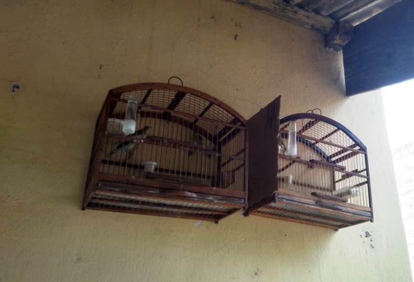 BPMA apreende 10 pássaros mantidos em cativeiro em Baixo Guandu
