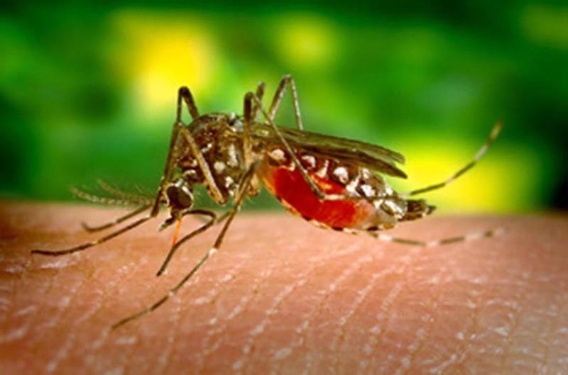 Se você eliminar os focos, o mosquito não aparece